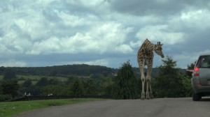 Safari Park, Great Britain